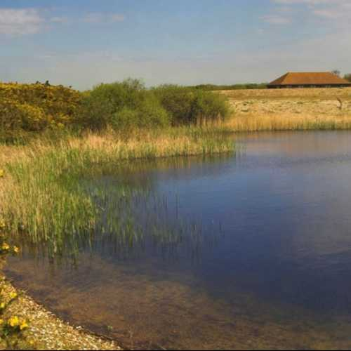 Explore Dungeness Reserve